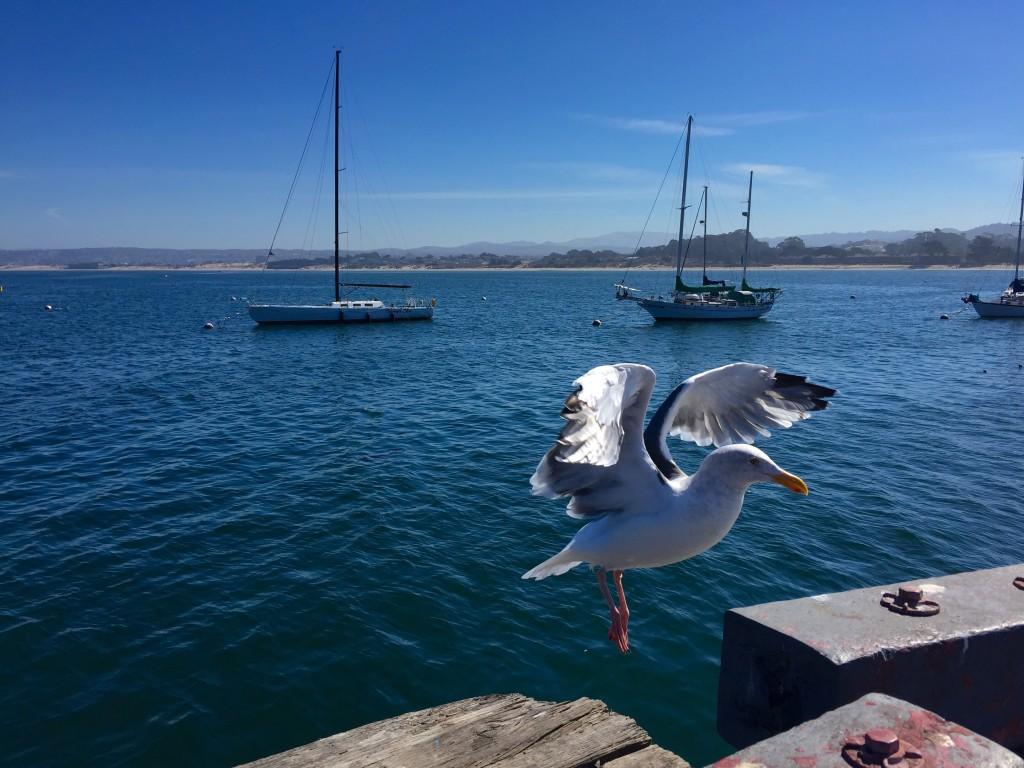 Walking along the pier in Monterey