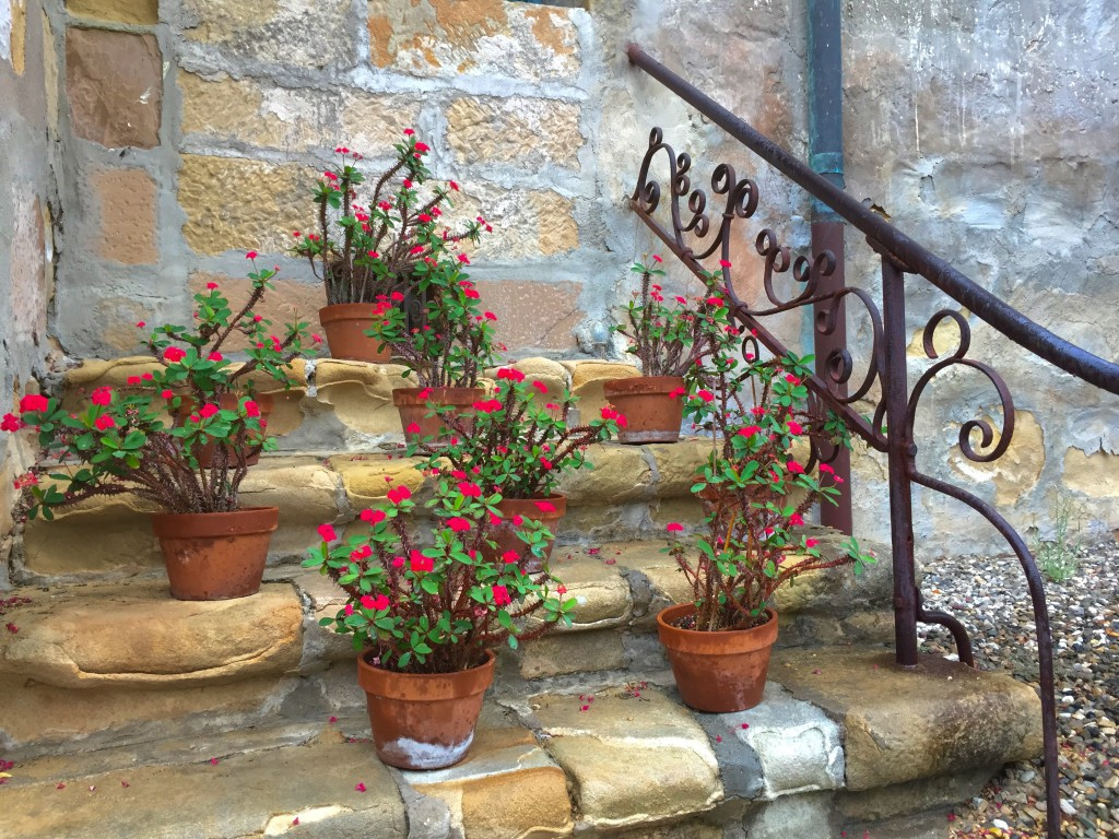 Pretty flowers on the steps
