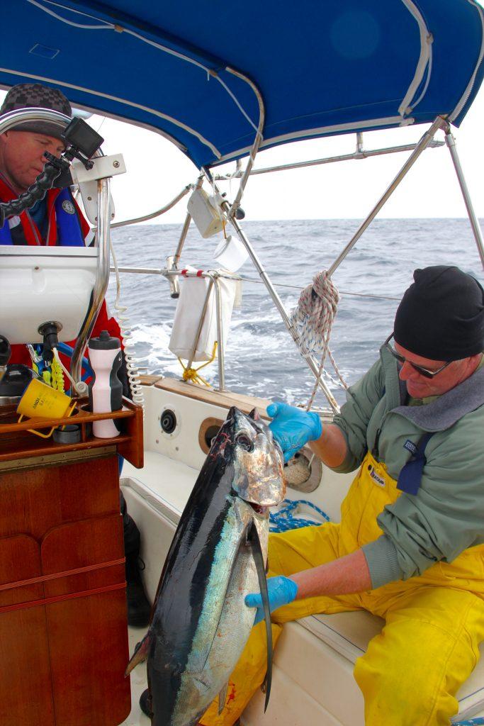 Our big catch, a huge , beautiful Albacore Tuna!